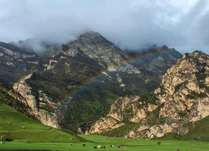 Настоящие горные коровы. Як, Корова, Горы, Радуга, Ребята, Туризм, Длиннопост