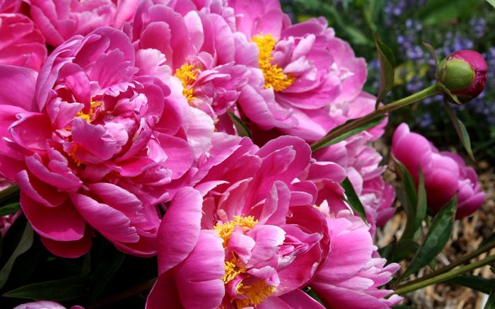 Неприхотливые растения для кладбища Неприхотливые, Кладбище, Могила, Цветы, Березы, Длиннопост
