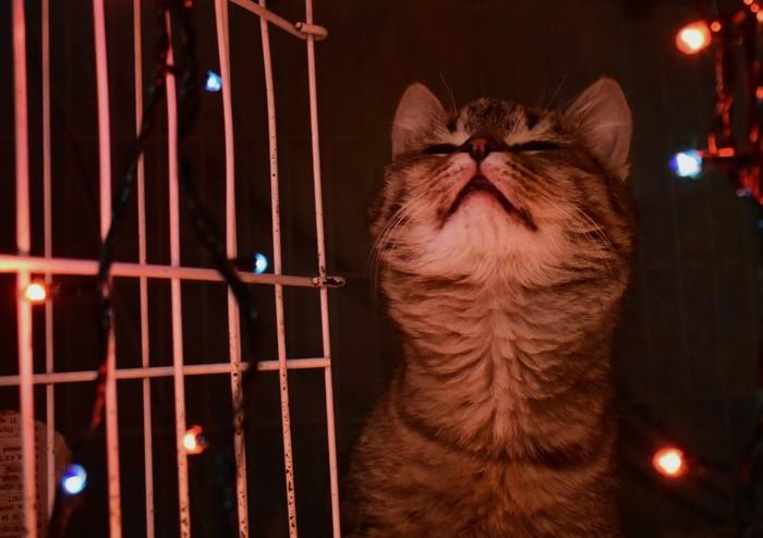 Огоньки и котики Кот, Котята, Приют для животных, Новый Год, Тольятти, Волонтерство, Длиннопост