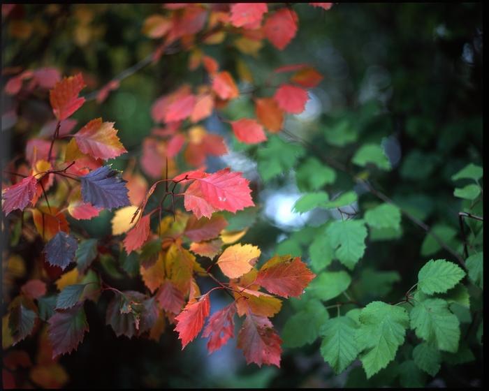 Цвет в одно касание Фотография, Pentax 67, Фотопленка