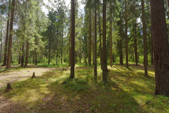 Лето, лес Лес, Собака, Фотография, Длиннопост