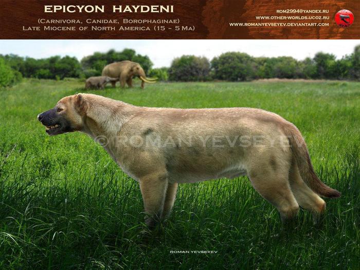 Эпичные собаки прошлого и самые крупные псовые в истории Собака, Наука, Животные, Палеонтология, Псовые, Млекопитающие, Биология, Длиннопост