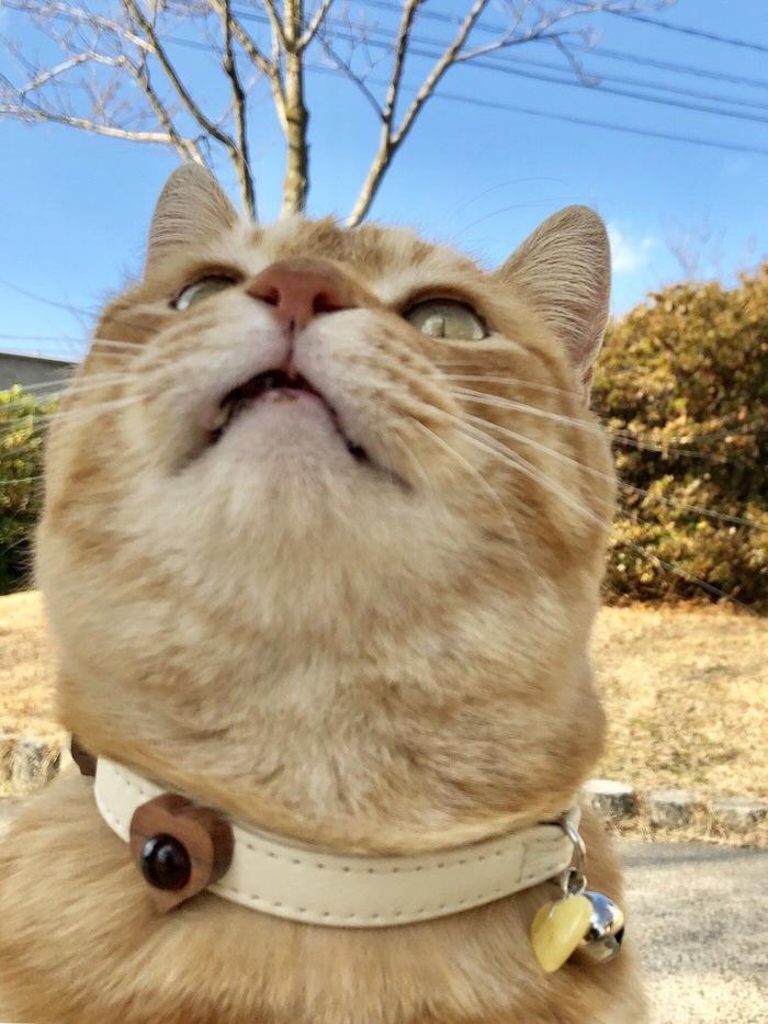 Подарки котикам из Калининграда в Японию)) Калининград, Кот, Необычные подарки, Япония, Длиннопост