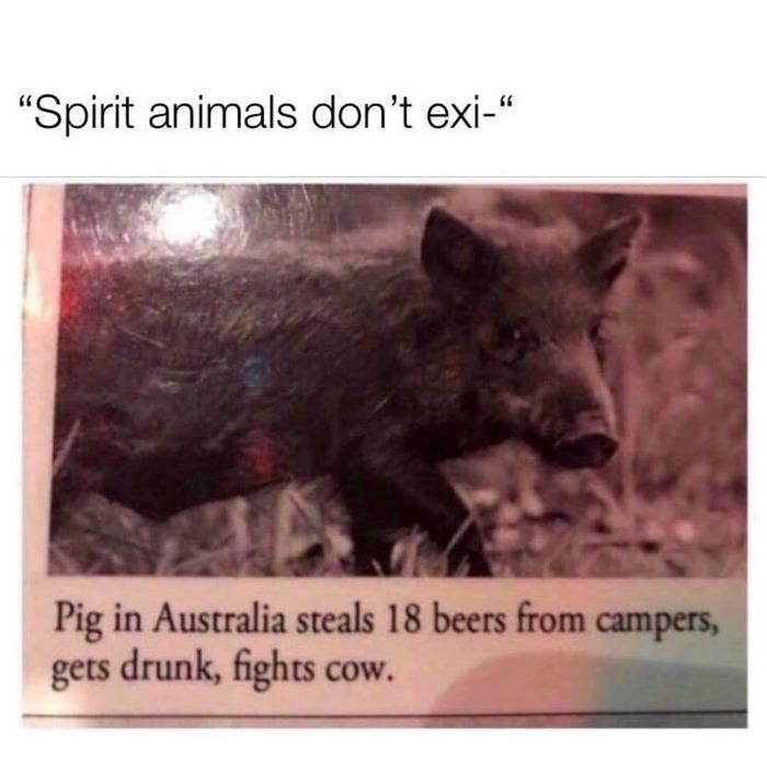 Тотемное животное Мое тотемное животное, Поросята, Австралия