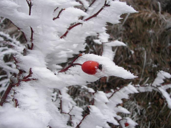 Ледяные художества Ветер, Туман, Мороз, Лёд, Природа, Фотография, Длиннопост