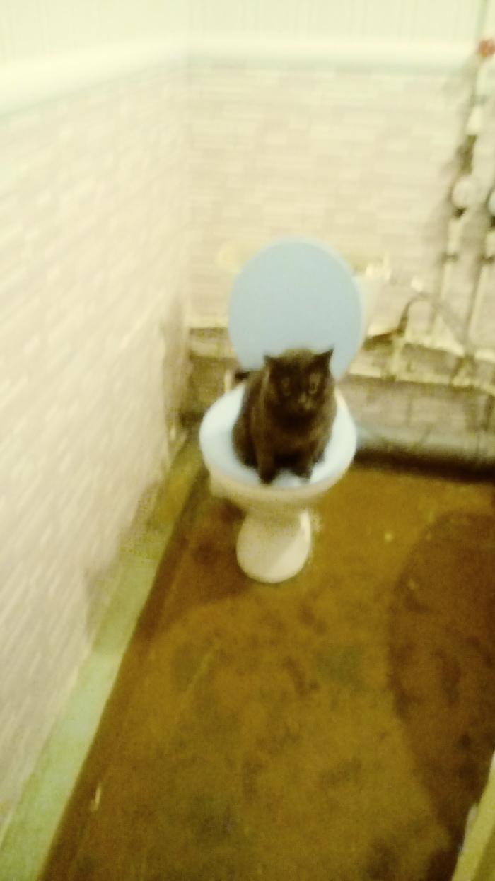 Суровый кот Кот, Суровость, Туалет