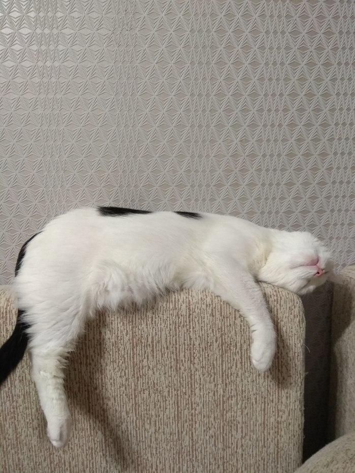 Неправильная котэ Кот, Наглость, Еда, Длиннопост