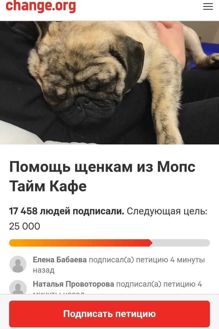 Тайм мопс кафе.  Петиция. Мопс, Собака, Москва, Без рейтинга, Собачники, Петиция, Длиннопост