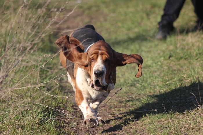 Отверженный Собаки и люди, Породистые собаки, Длиннопост, Собака