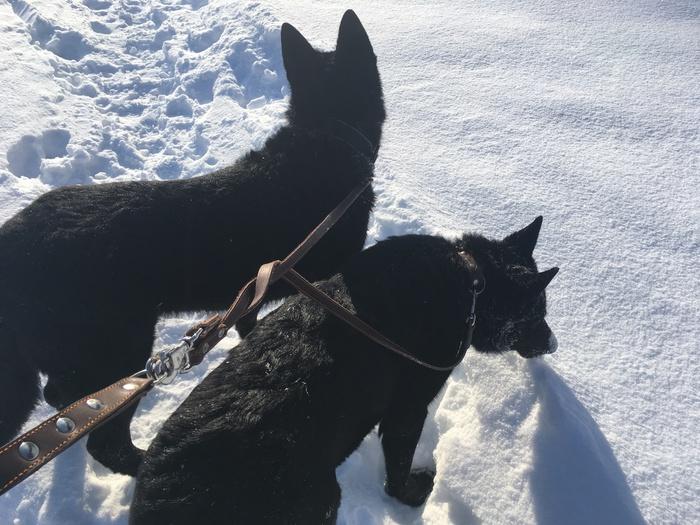 Прогулка по зимним Жигулям Зима, Снег, Жигули, Собака, Прогулка, Фотография, Видео, Длиннопост