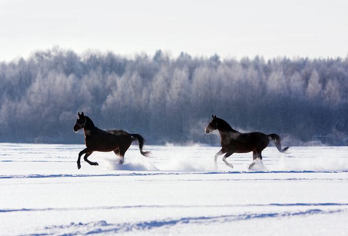 Скользящие Canon, Лошадь, Животные, Фотография