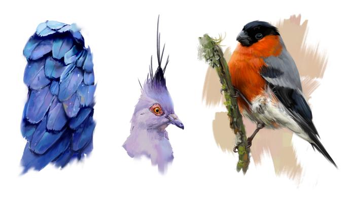 Стадик по птицам Иллюстрации, Арт, Рисунок, Цифровой рисунок, Птицы, Снегири, Анималистика, Никита Рожков