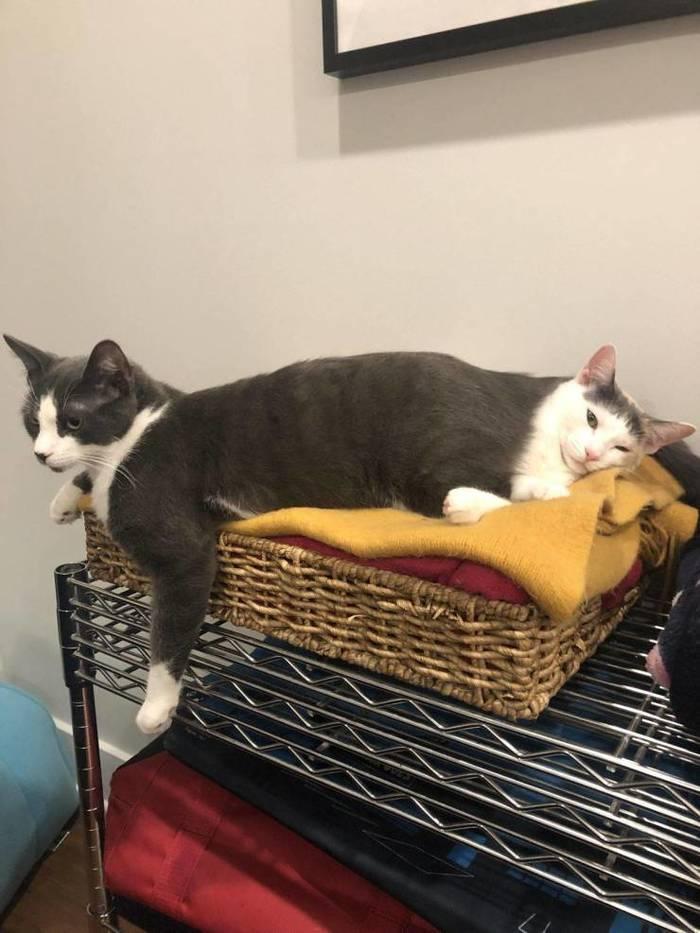 Котокот