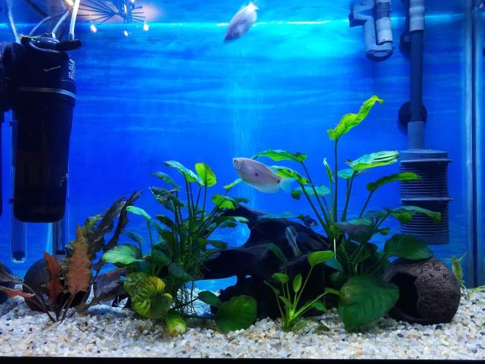 Мой первый '' самостоятельный'' аквариум или новое это хорошо забытое старое) Часть 2 Аквариум, Аквариумистика, Красота, Живой уголок, Длиннопост, Видео
