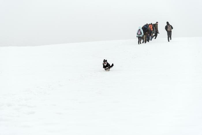 Юта Фотография, Снег, Зима, Собака, Шерстяной волчара, Беларусь, Могилев, Поход, Длиннопост