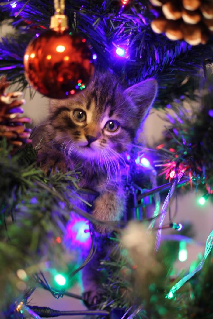 Кусочек минувшего Нового Года вам в ленту! Кот, Новый Год, Ёлка, Длиннопост, Домашние животные