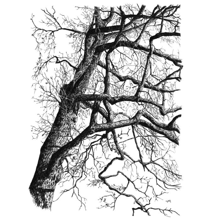 Дуб в Павловском парке Рисунок, Графика, Скетч, Дуб, Дерево, Чернила, Природа, Длиннопост, Павловский парк
