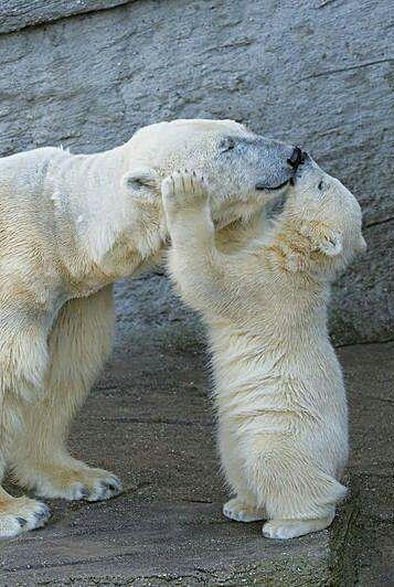 Поцелуй для мамы
