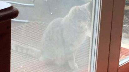 Кошка-«Хатико» полтора года ждет погибшего друга-собаку Хатико, Кот, Дружба, Собака