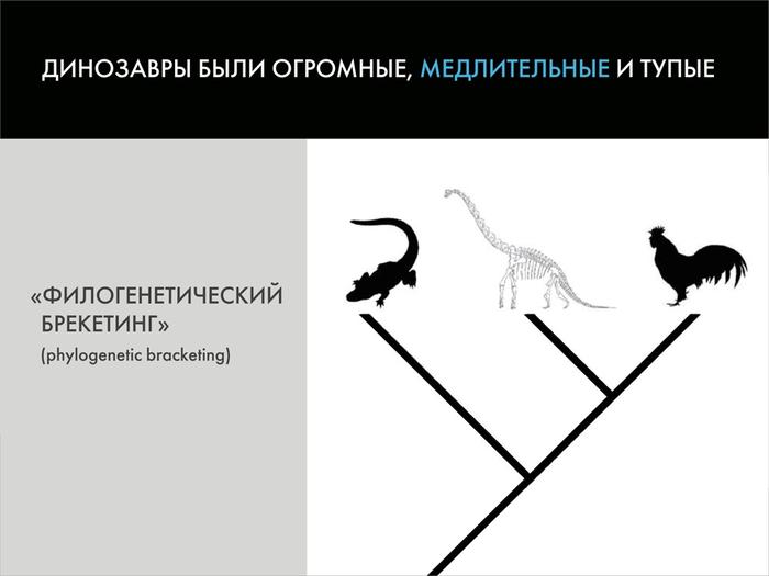 Палеонтологические твари и где они обитают: мифы о вездесущих динозаврах. Часть 2 Палеонтология, Динозавры, Павел Скучас, Антропогенез ру, Ученые против мифов, Гифка, Длиннопост