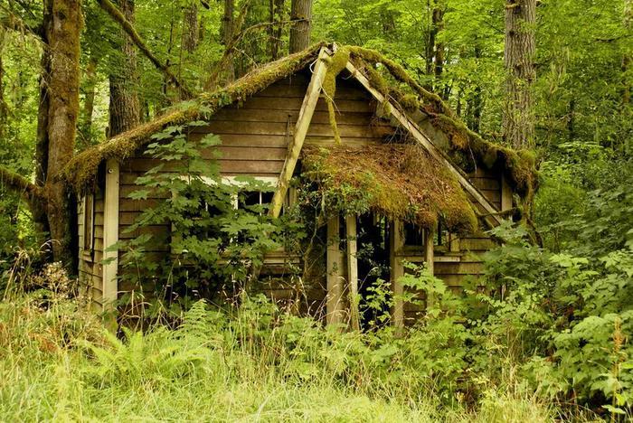 После людей Заброшенное, Дом, Строение, Лес, Дерево, Мох, Длиннопост