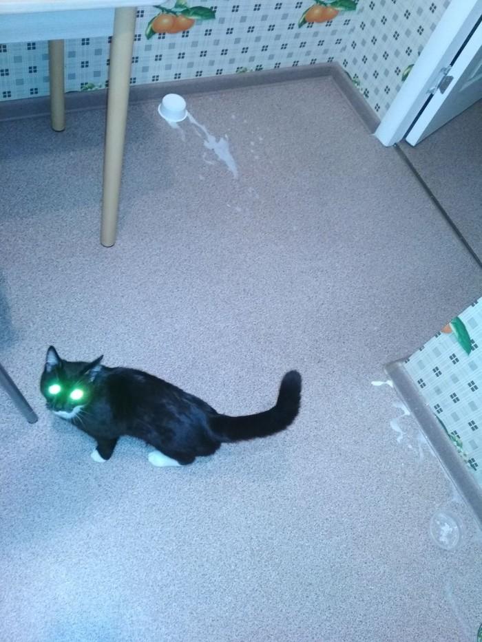 Хулиган Кот, Длиннопост, Домашние животные, Хулиганство, Коробка и кот