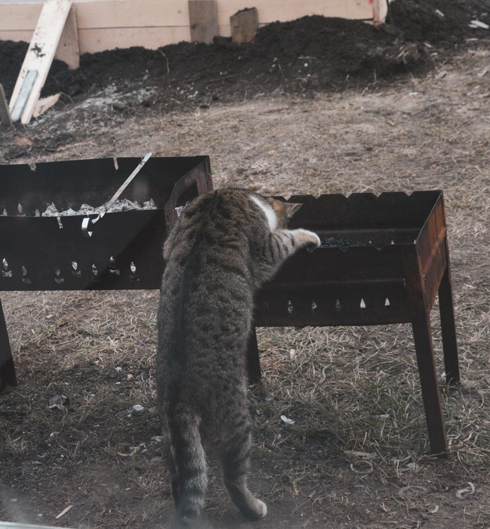 Кот помощник Котомафия, Кот, Шашлык, Помощник