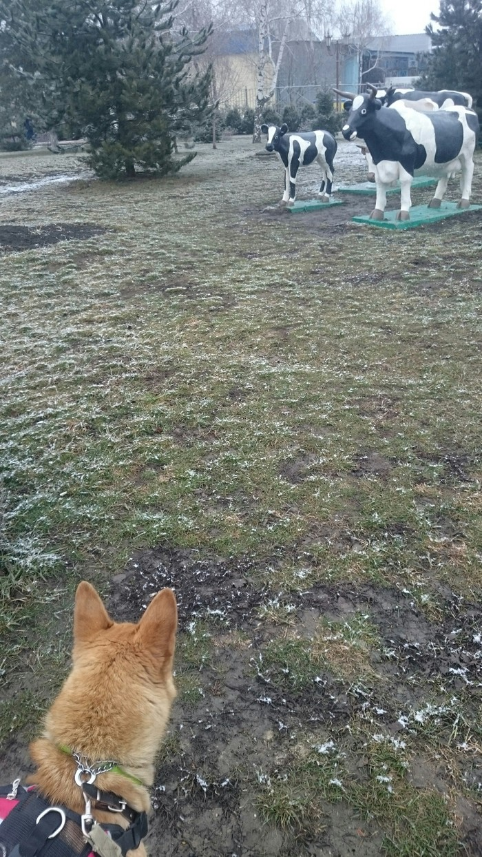 Неожиданно Собака, Лайка, Корова