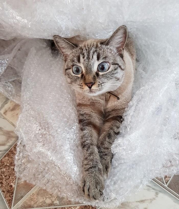 Пупырки Кот, Котомафия, Пупырчатый полиэтилен