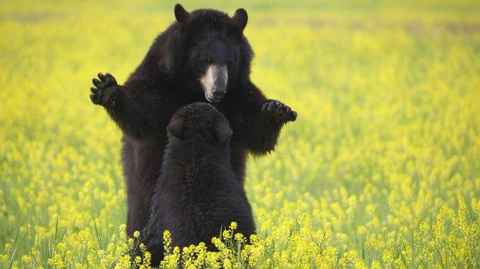 Страшная сказка Медведь, Дикая природа, Фотография, Диалог