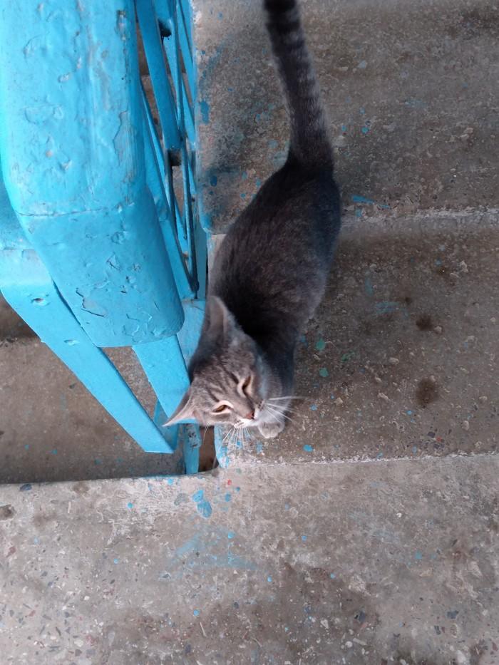 Подъездная кисяу Кот, Длиннопост, Домашние животные