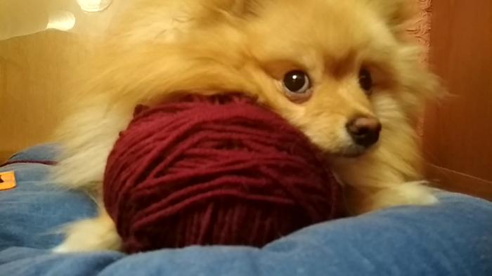 Собака 1:0 вязание Собака, Шпиц, Клубок