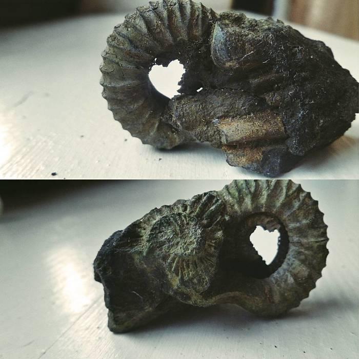 Моя доисторичность из Юрского периода Оксофрдского яруса 163 - 157 млн лет назад. Палеонтология, Окаменелости, Парк Юрского Периода, Длиннопост