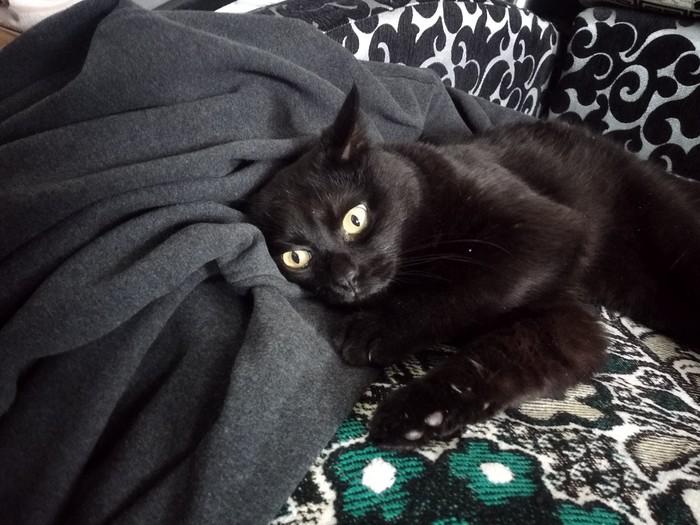 Кот токсикоман - горе в семье Кот, Кайф, Домашние животные