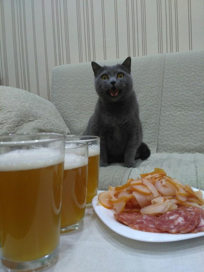 Мне кажется у моего кота есть ко мне какие то претензии