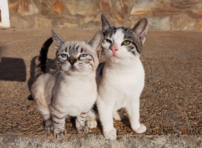 Просто пятничные котики испанской глубинки Кот, Март, Испания, Весна, Позитив, Длиннопост, Домашние животные