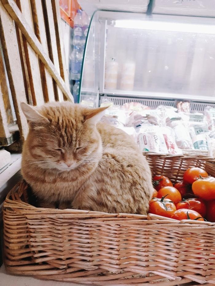 Булочка хлеба Кот, Магазин, Рыжий, Домашние животные