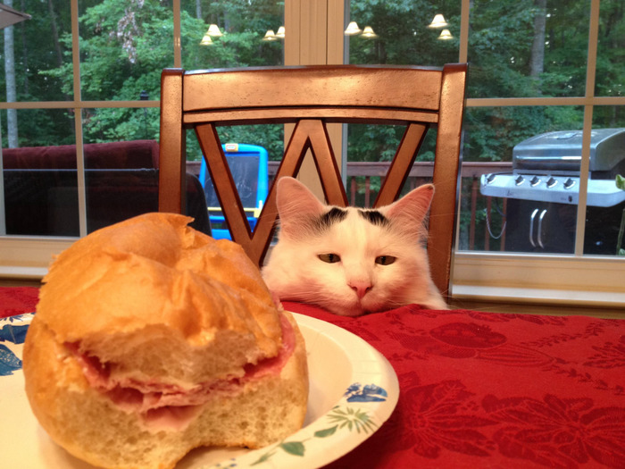 Когда ты на диете, а рядом кто-то ест твою любимую булочку с колбасой
