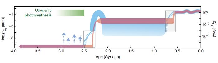 Прелюдия истинной многоклеточности или ранние эволюционные эксперименты? Палеонтология, Окаменелости, Многоклеточные, Докембрий, Копипаста, Elementy ru, Длиннопост