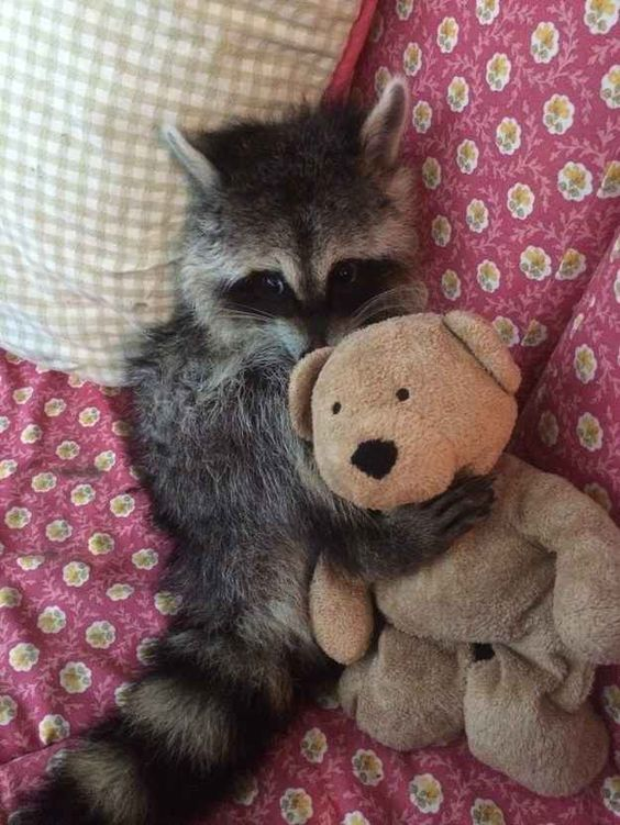 Мой медведь меня защитит
