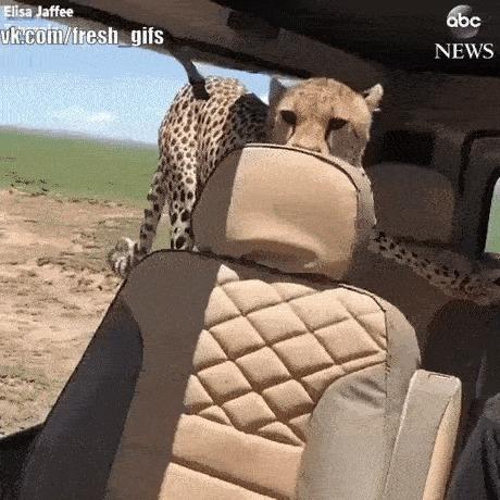 Покупатель: - А сиденья то херовенькие, хозяин.