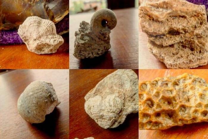 Мои окаменелости. Окаменелости, Прошлое, Природа, Земля, Наука, Палеонтология