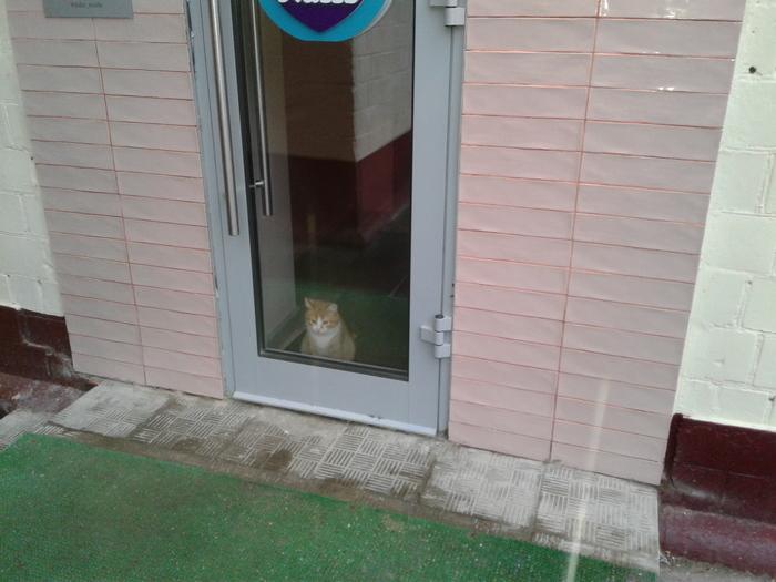 Сторож Сторож, Кот