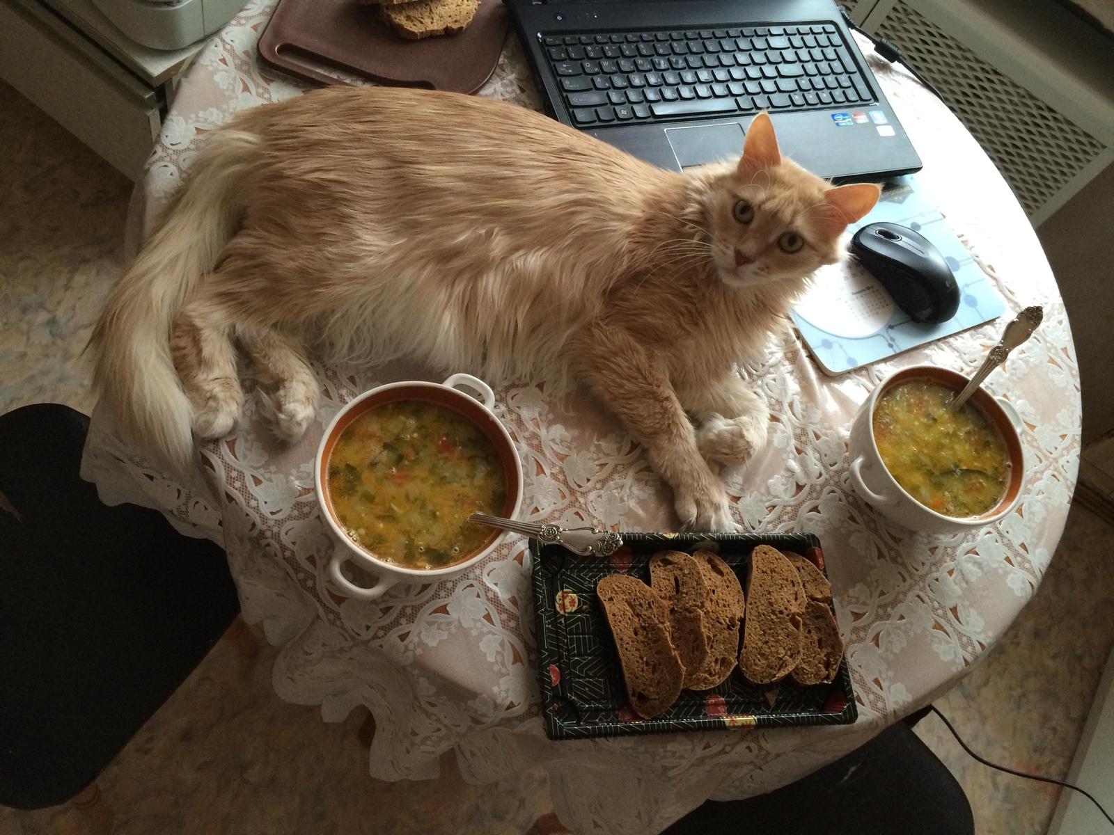 Рецепты супов для котов