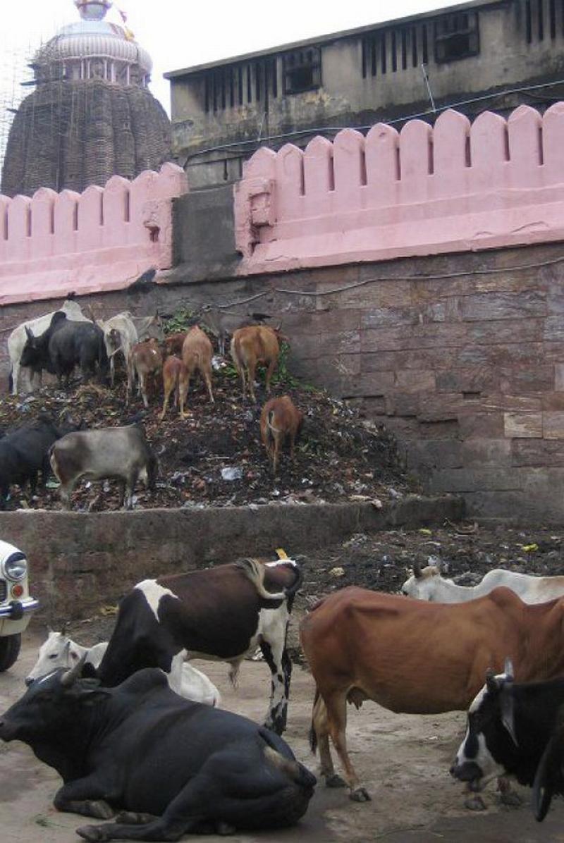 Индусы в жопу фото 534-975