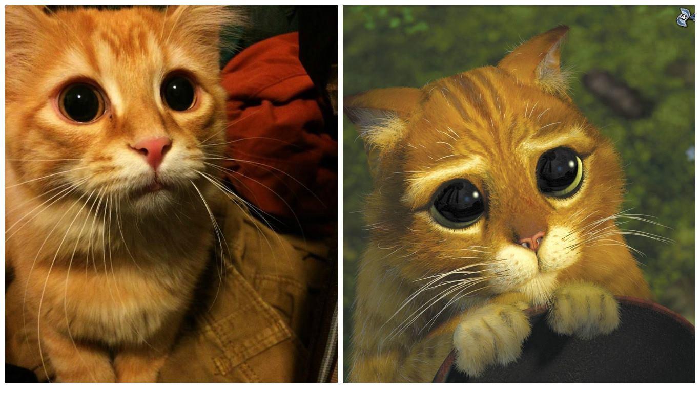 Рисунок кота из шрека