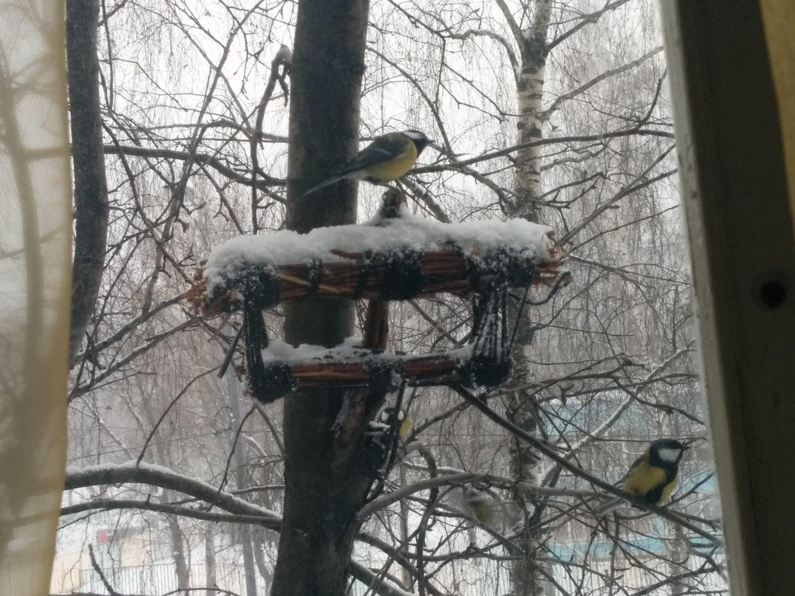 Кормушка птиц за окно своими руками фото 316