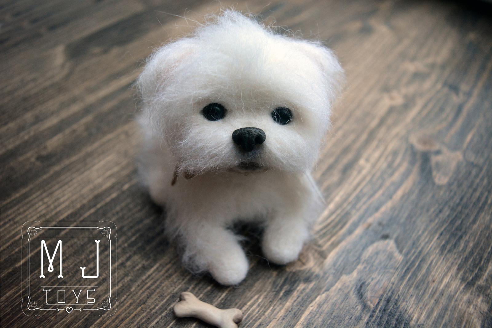 мальтийский щенок