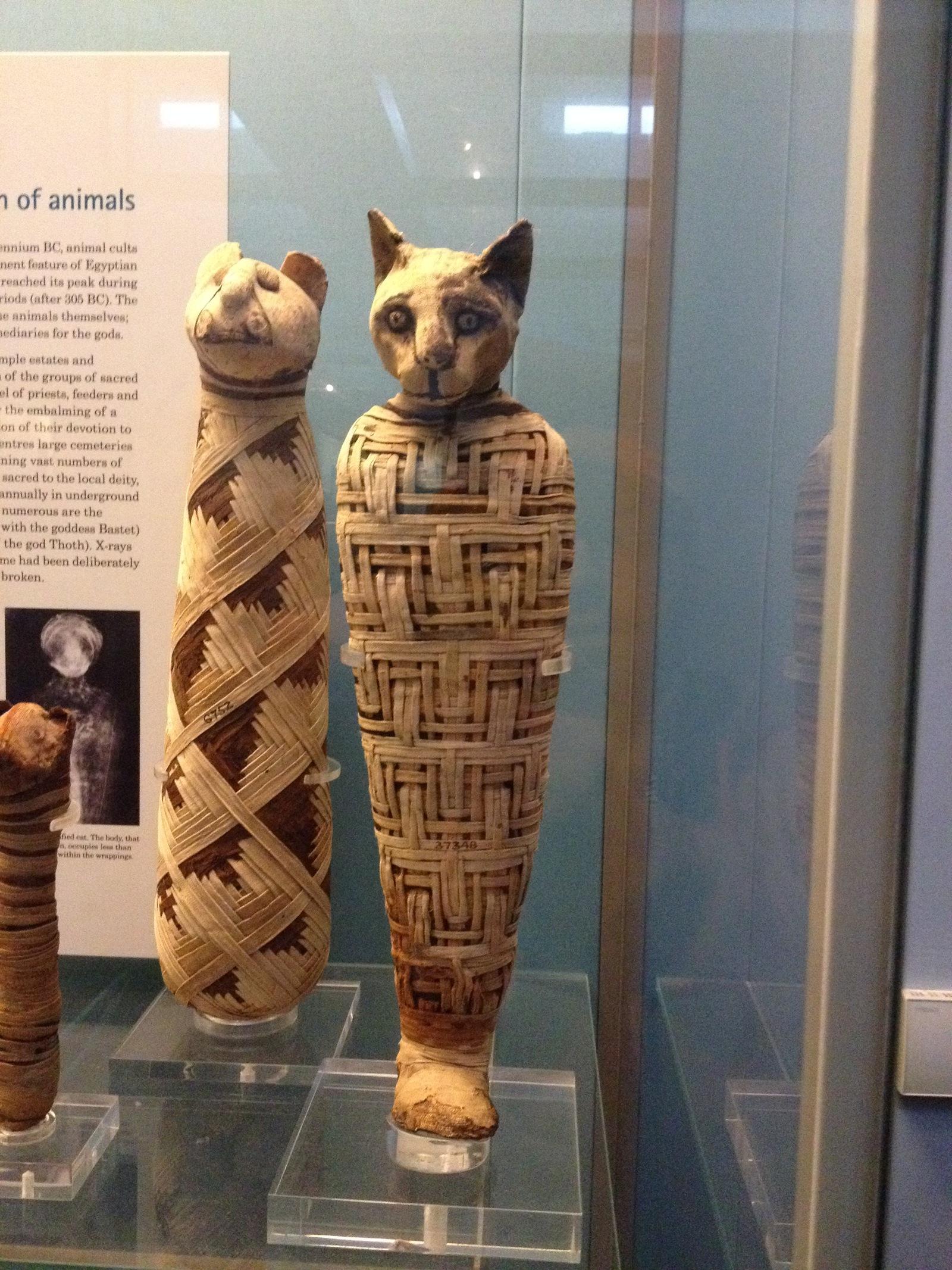 Картинки по запросу мумии кошек фото