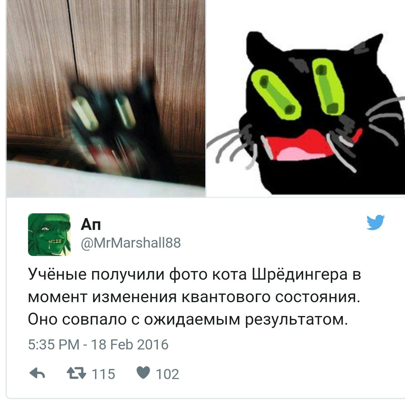Кота ударение